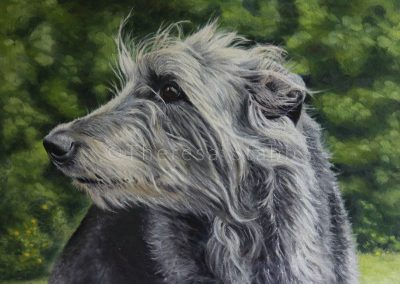 Gwennie, Deerhound, Oil on canvas, 2014. SOLD.